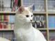 「でかくなったなぁ〜」 サンシャイン池崎、元保護猫「雷神」の1歳の誕生日をしみじみお祝い
