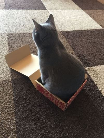 フェリシモ猫部「箱入り猫」