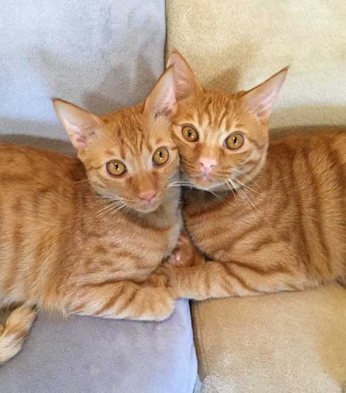 袖にはまった 猫 みのむし サム ディーン 兄弟