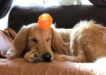 こー君 ボール