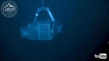 深海生物とワニ