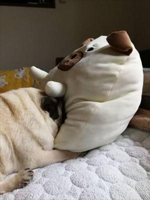 枕みたいなワンちゃん