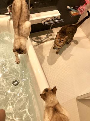 お風呂待ち猫ちゃん