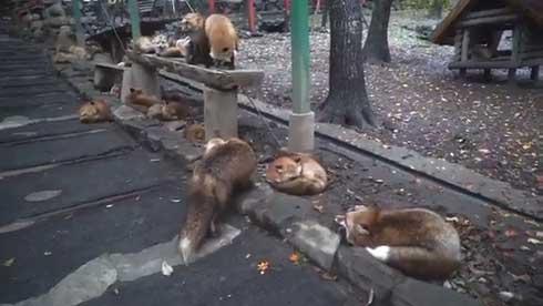 マッスルギツネ 狐 蔵王キツネ村 ムキムキ 腕 筋肉
