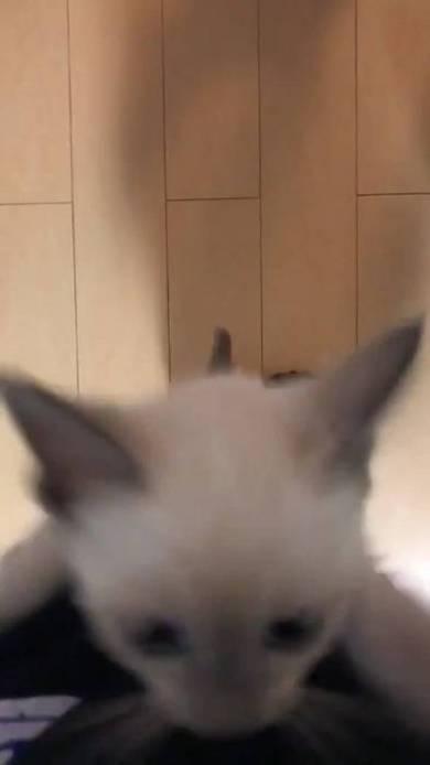 子猫 しらす 登坂力