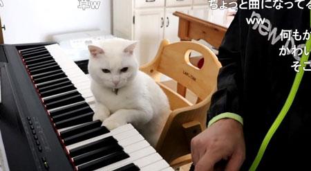 両足でピアノを弾くニャンコ投稿主さんの手アップ