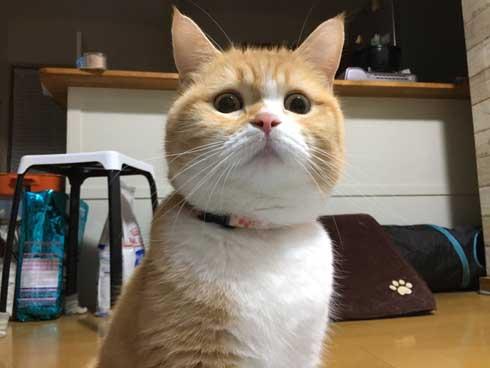 ンバッ 猫 ディフェンス 威嚇 驚き 顔 尻尾 かわいい 2匹 写真