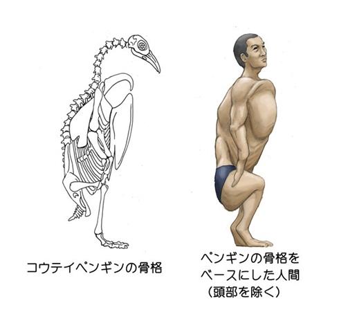 骨格 動物