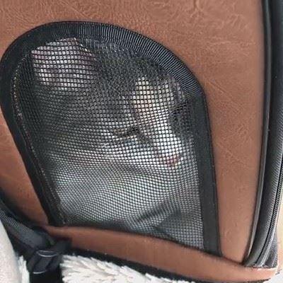 「ヤヴァイ」と鳴く猫ちゃん