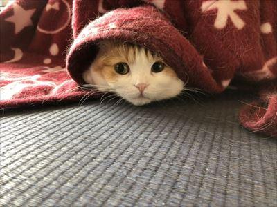セクシーな猫ちゃん