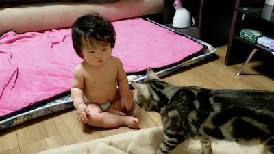 猫 当て逃げ 赤ちゃん