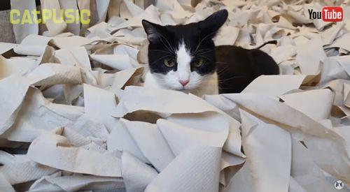 トイレットペーパーの中でこちらを見る猫ちゃん