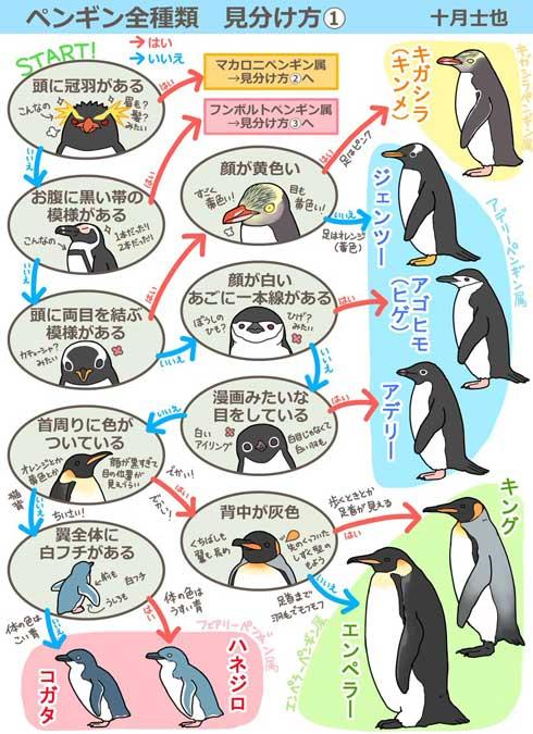ペンギンの見分け方\u201dイラストがわかりやすいと話題に 「水族館に