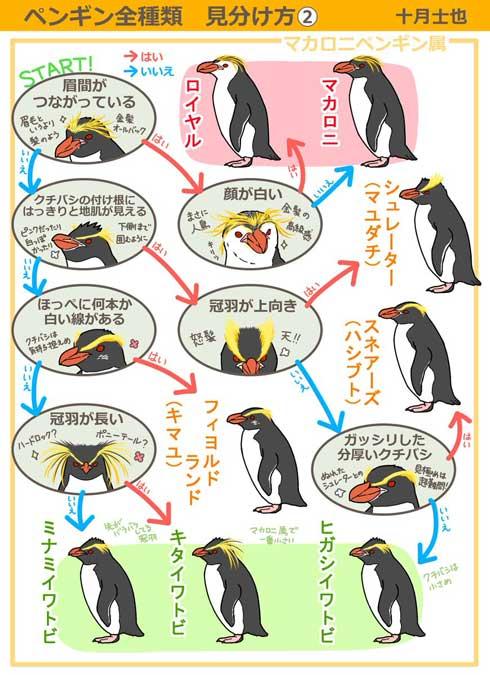 ペンギン 全種類 見分け方 イラスト 十月士也 選択