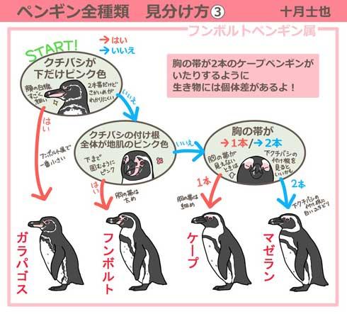 ペンギンの見分け方イラストがわかりやすいと話題に 水族館に行きたく