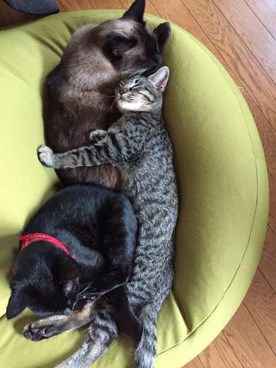 猫かどうか怪しくなってきた 黒猫 真っすぐ 体 横 背筋 伸ばす
