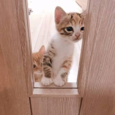 のぞきこむ 子猫