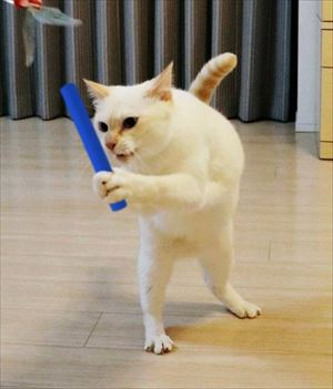 aiboと遊ぶ猫ちゃん