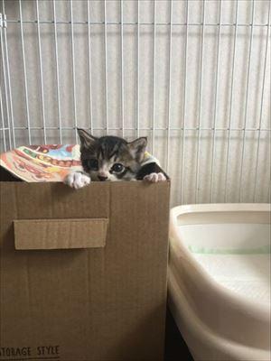 壁から出てきた猫ちゃん