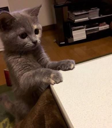 座り方 猫 もなか