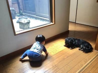 ぺこ りゅうちぇる リンク 息子 生後 10カ月 育児 子育て ブログ 犬 動物