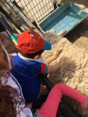 ぺこ りゅうちぇる リンク 息子 生後 10カ月 育児 子育て ブログ 羊 動物