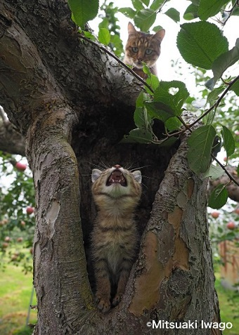 岩合光昭 自由ネコ