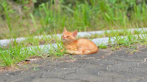 2016年の猫ちゃん