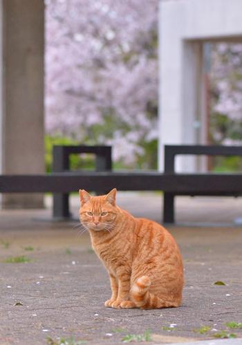 こちらを見る猫ちゃん