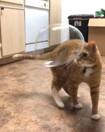 猫ちゃんとしゃぼん玉