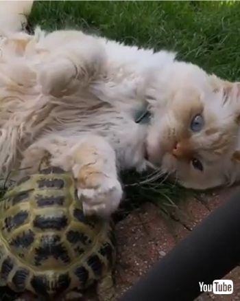 bites at cat's fur