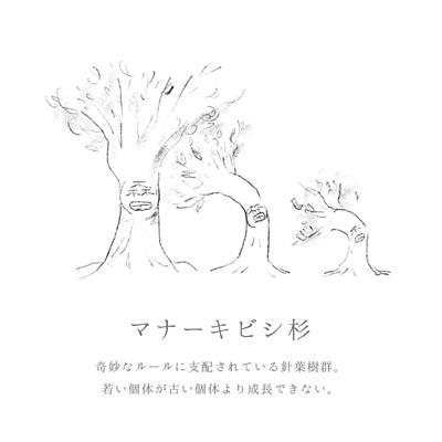 マナーキビシ杉