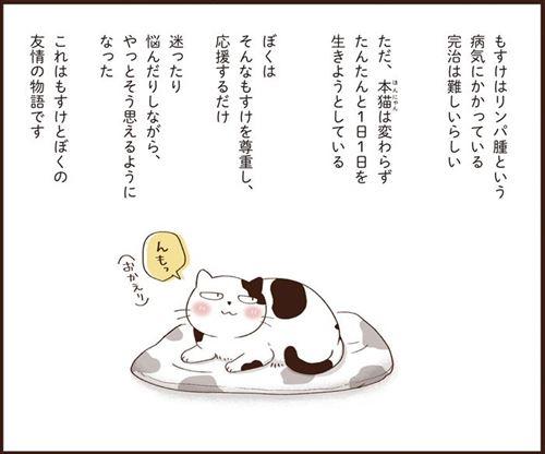 猫のターミナルケア