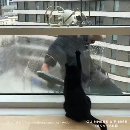 窓に前足をかけるギネスくん