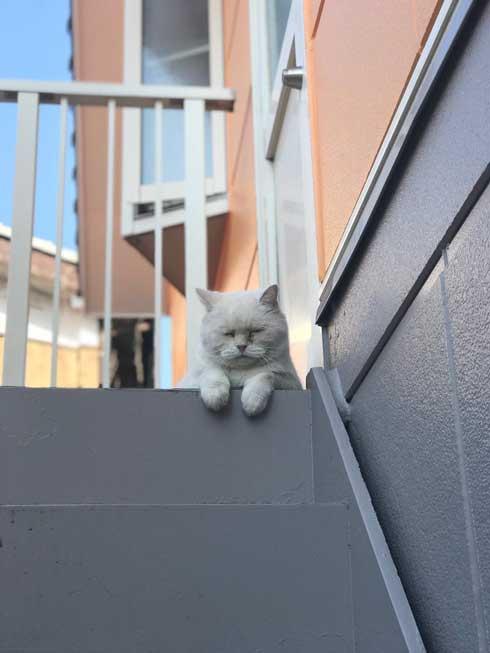 しわしわ ピカチュウ 我が家 猫 顔 似てる