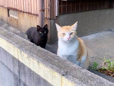 こちらに向かってくる黒猫ちゃん