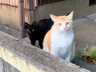 さらに近寄る黒猫ちゃん