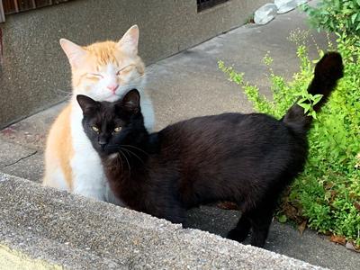 不機嫌そうな黒猫ちゃん