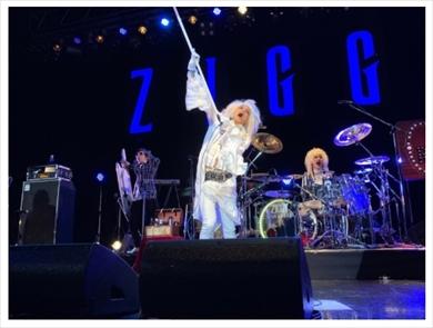 ZIGGY 森重樹一 ポリープ 手術 声帯 ライブ ブログ