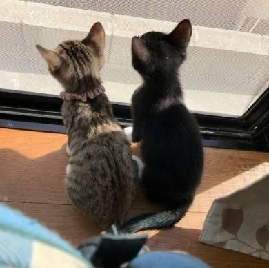 猫姉妹 天文学的にかわいい