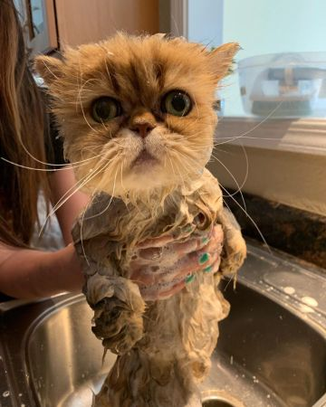 洗われている猫ちゃん