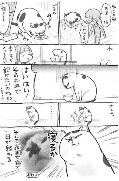 犬と猫どっちも飼ってると 3巻 松本ひで吉
