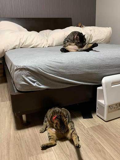 猫 座りながら スマホ 見るだけ おっさん のんびり 体勢 ねずみ