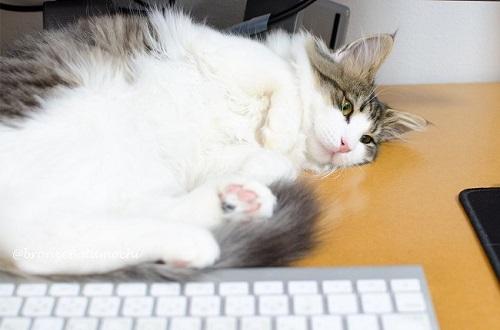 nyans猫社員