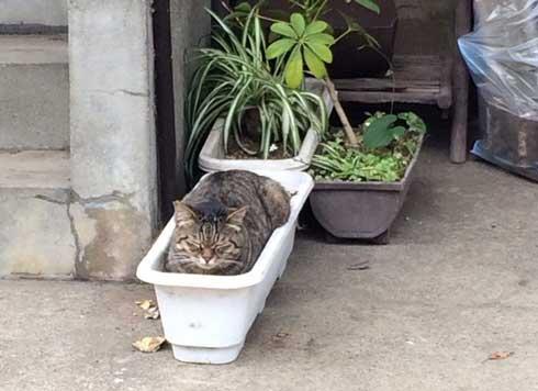 散歩 猫 生えてた 鉢植え プランター 寝る 初夏