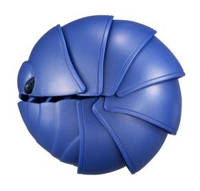 丸まった青いダンゴムシ