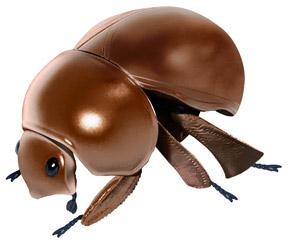 広がった茶色のマンマルコガネ