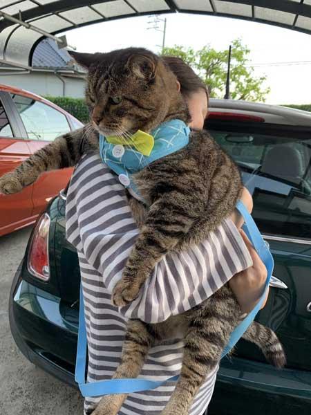 猫 大きい デブ メインクーン超え 抱っこ 貫禄 雑種