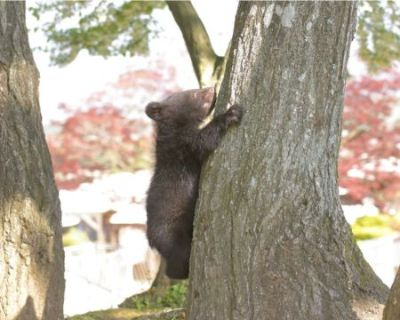 明咲ちゃんの木登り
