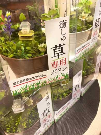 草 生やす ボタン w 専用 植木鉢 秋葉原ラジオスーパー
